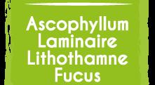 Ascophyllum Laminaire Lithothamne Fucus