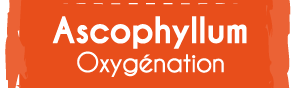 Ascophyllum