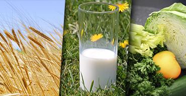 Allergies Intolérances Gluten, Lactose, Vegan