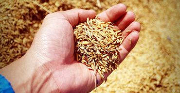 Biodyne et le développement durable